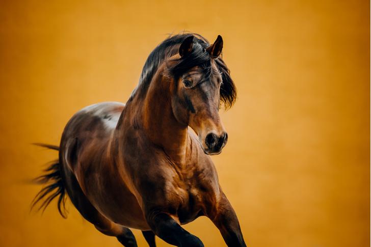Фото №1 - Сколько сил у лошади?
