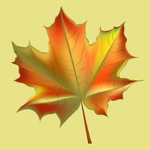 Фото №2 - Гадаем на осенних листьях: какого цвета будут глаза у твоего будущего парня 💖
