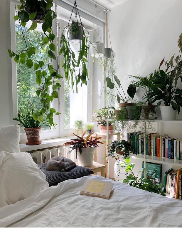 Фото №6 - Растения в интерьере: 7 идей для домашнего сада