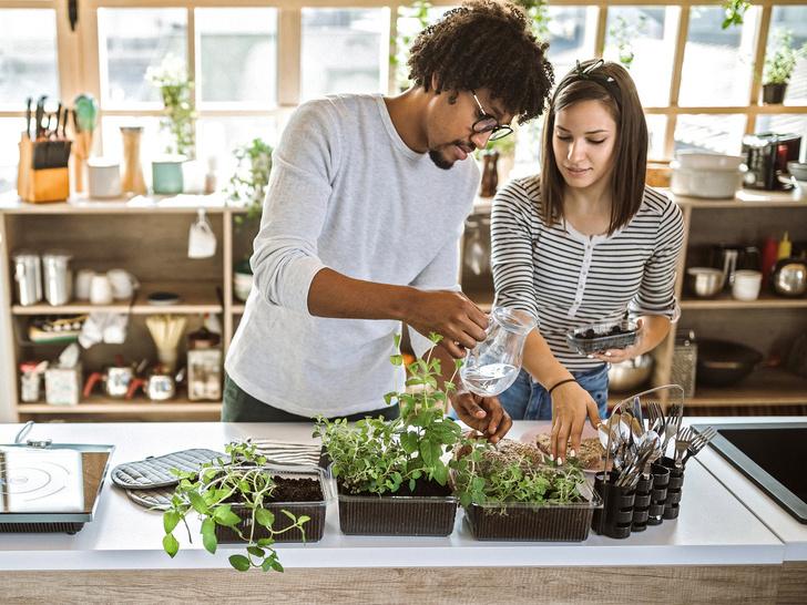 Фото №3 - Домашний огород: 5 овощей, которые вы можете вырастить на подоконнике