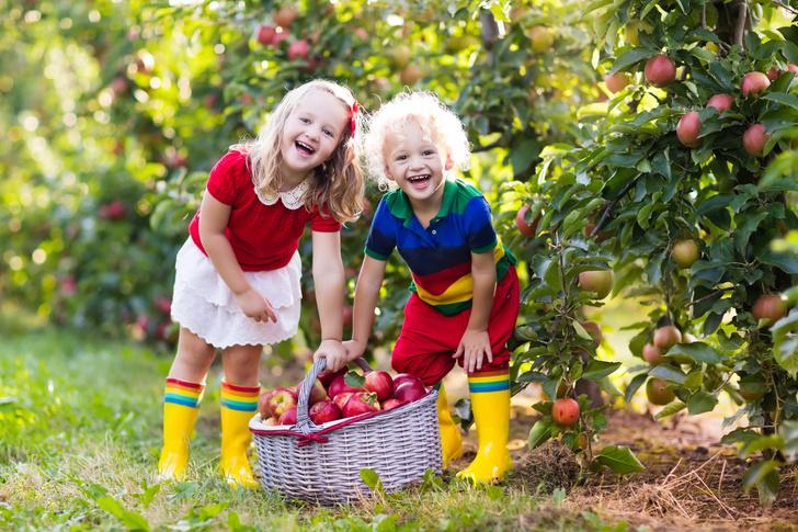 Яблочный Спас 2021: народные приметы и православные обычаи