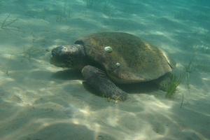 Фото №5 - К морю в сентябре: изумрудный остров Закинф