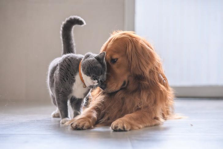 Фото №1 - 9 полезных вещей, которым учат нас домашние животные