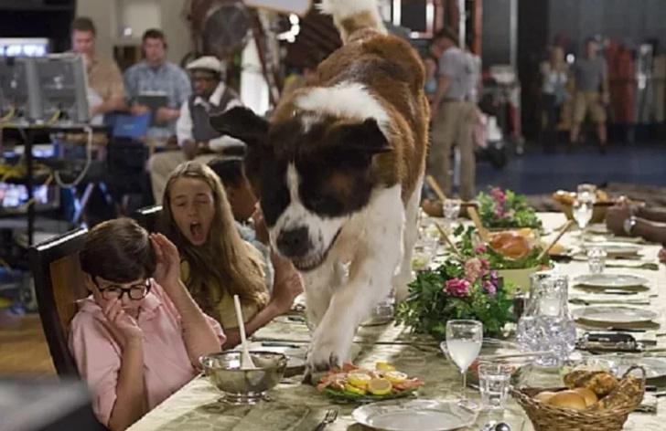 Фото №2 - Как сходить в кафе с собакой, чтобы в твоем счете не было разбитой посуды и покусанных посетителей