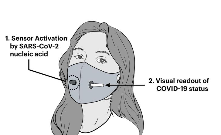 Фото №2 - Ученые создали лицевую маску со встроенным детектором коронавируса