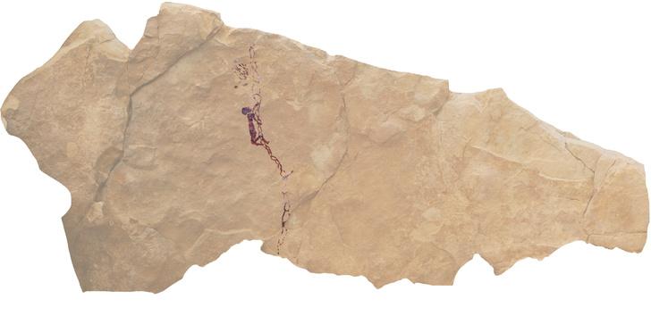 Фото №1 - В Испании найден древний рисунок, на котором изображен сбор меда