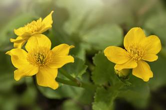 Фото №5 - Смертельно опасны: 3 красивых цветка, которые лучше не рвать