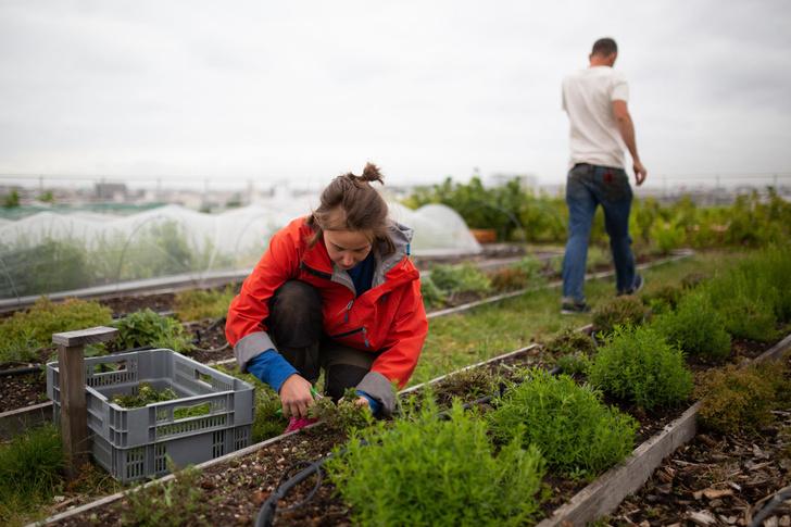 Как подготовить кустарники к холодам