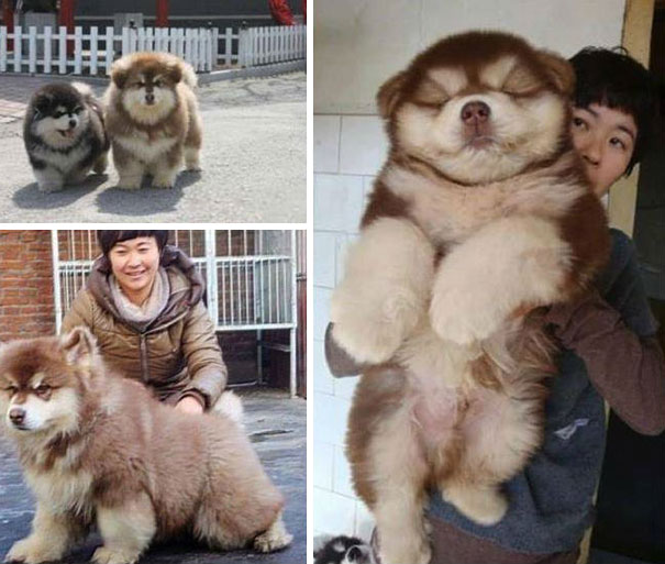 Фото №6 - Реальные собаки, которые выглядят как плохой фотошоп (много фото)