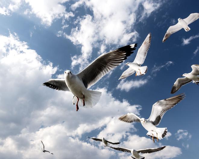 сон чайка