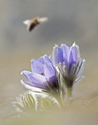Фото №15 - Загадочные цветы весны: какие эфемероиды искать в парках и лесах Москвы и России