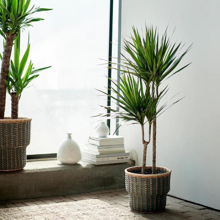 Фото №5 - 5 самых модных растений этой осени