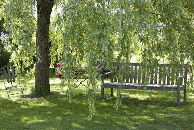Фото №3 - Какие деревья нельзя сажать рядом с домом
