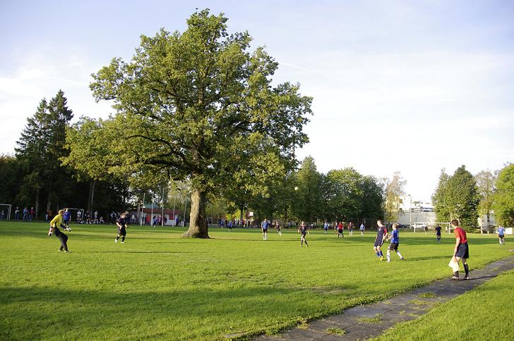 Фото №5 - Деревянные выборы: самые интересные деревья мира