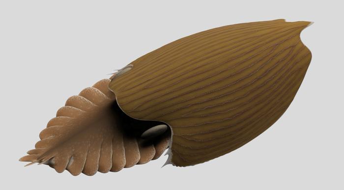 Фото №1 - Обнаружены гигант кембрийского периода