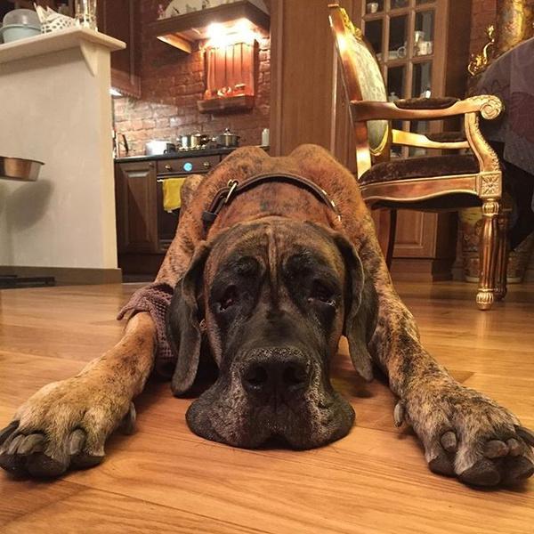 Фото №8 - Домашние животные звезд: собаки, кошки, лемуры, свиньи и даже улитки!