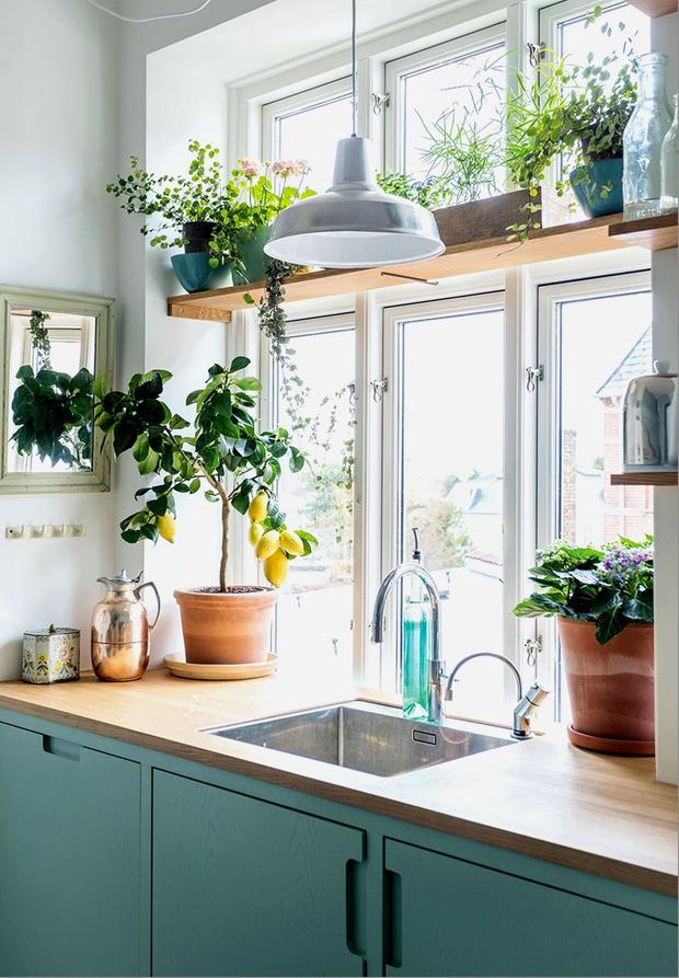 Фото №1 - 8 модных средиземноморских растений для балкона и патио