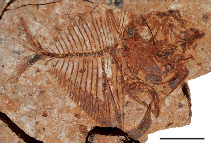 Фото №1 - В египетской пустыне обнаружены останки тропических рыб