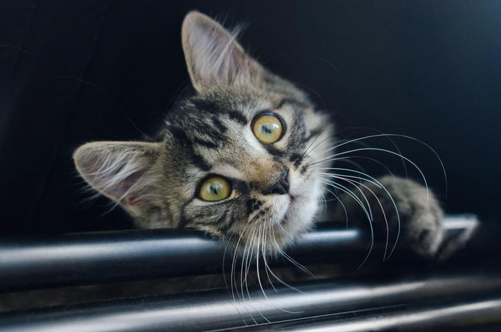 Фото №7 - Как кошки захватили мир