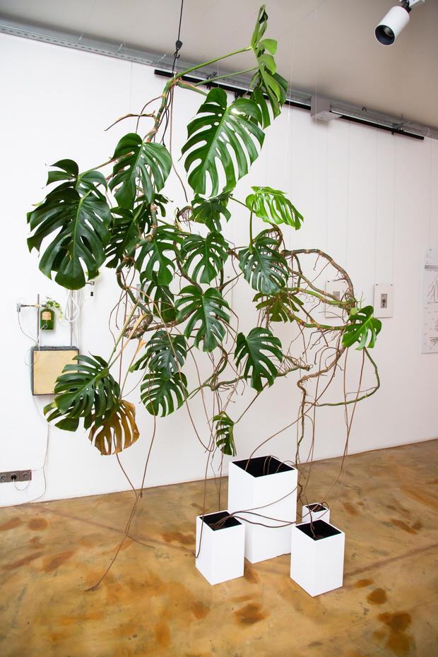 Фото №1 - Весна как феномен на выставке в Marina Gisich Projects