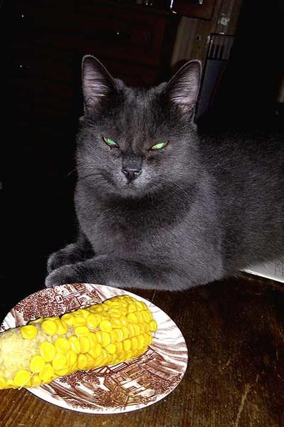 Злость, любовь, месть и еще 15 эмоций котов