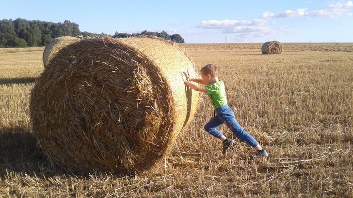 Фото №10 - Детский фотоконкурс «Готовимся к осени»: голосуем за лучшие кадры