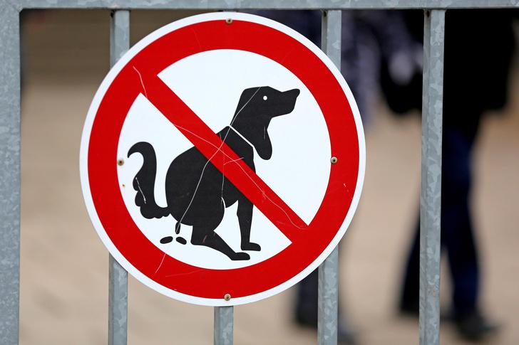 Фото №1 - Нерадивых владельцев собак в Израиле будут вычислять по ДНК из неубранных «мин»