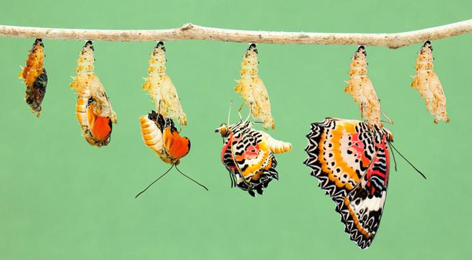 Миф о мгновенном успехе: что мешает нам изменить жизнь