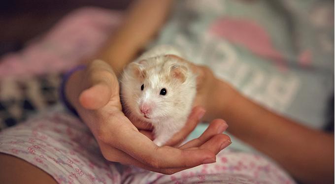 Чему нас учат животные