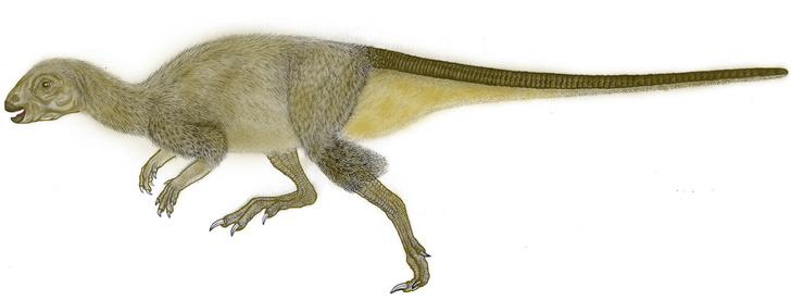 Фото №19 - Динозавр из Помпеев юрского периода: история открытия и изучения ящера из Забайкалья