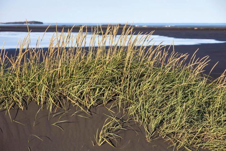 Фото №2 - О чем шепчут травы, или Как с помощью растений отыскать воду, руду и даже золото