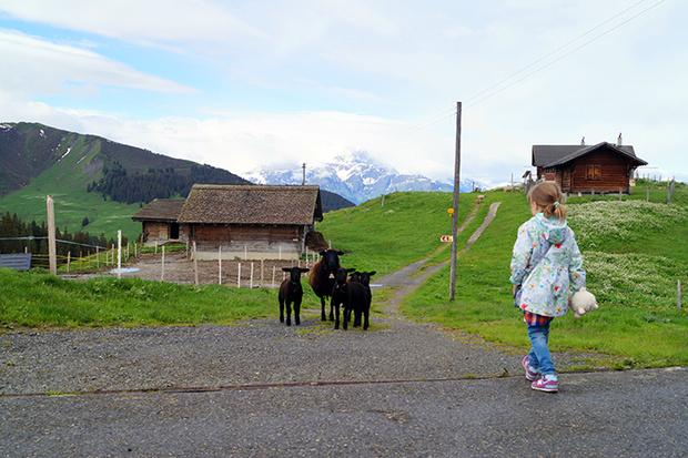 Фото №5 - Летняя Швейцария: горы возможностей для семейного отдыха