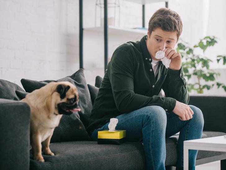 Фото №7 - Отдать нельзя оставить: что делать, если у вас аллергия на домашнее животное