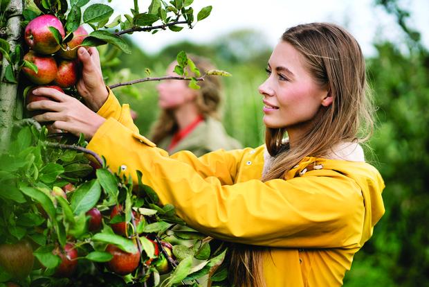 Фото №1 - Как удвоить урожай фруктов и овощей, зная всего одну простую технологию