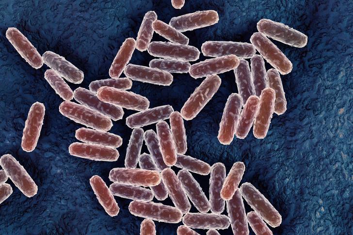 Фото №1 - Выявлен новый штамм чумы, который может передаваться от человека к человеку