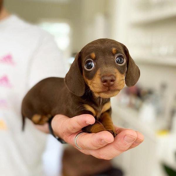 Фото №12 - Самые милые собачки в мире: фото и видео, после которых ты захочешь завести щеночка