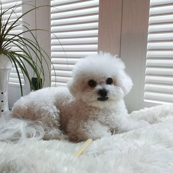 Фото №11 - Pretty Unnie: Самые интересные подробности о шикарной «Королеве Чорин» Щин Хе Сон 👸🏻