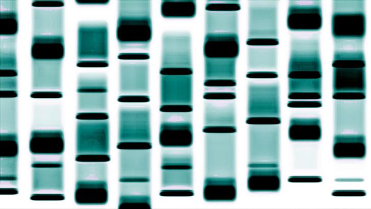 Фото №1 - Обнаружена мутация, блокирующая смертельные вирусы