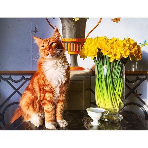 Фото №22 - Домашние животные звезд: собаки, кошки, лемуры, свиньи и даже улитки!