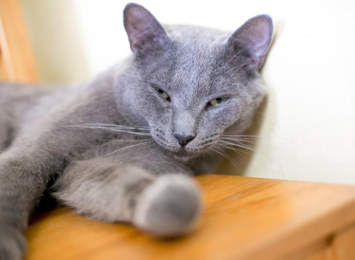 Фото №2 - Зоологи обнаружили, как кошки улыбаются