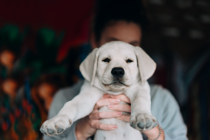 Фото №4 - Топ-15 самых популярных в России пород собак