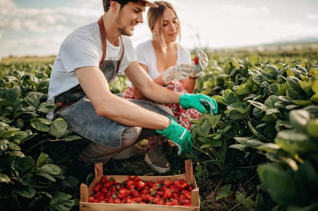 Фото №4 - Как удвоить урожай фруктов и овощей, зная всего одну простую технологию