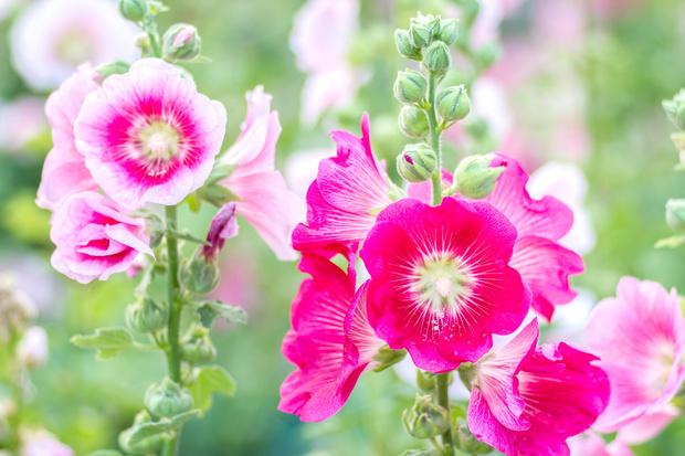 Фото №6 - Как выглядят анчар, мандрагора и другие таинственные растения, которые ты встречал в книгах