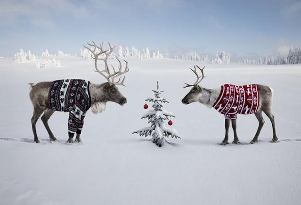 Фото №3 - Таро-прогноз на декабрь для всех знаков зодиака