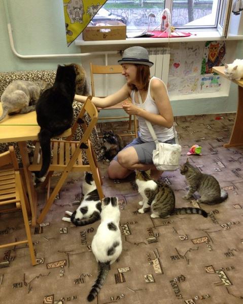 Фото №2 - Необычные кафе Красноярска: играем с кошками и смотрим фильмы