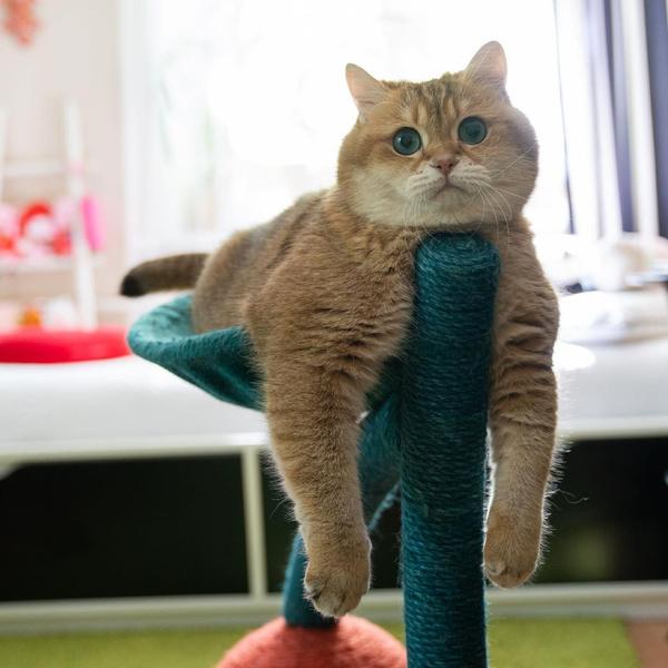 9 самых знаменитых котиков России