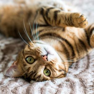 Фото №1 - Тест: Выбери котика, а мы скажем, как ты проведешь выходные