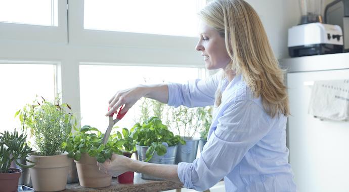 Если у вас нету дачи: какую зелень и микрозелень легко вырастить на подоконнике