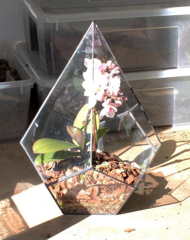 Фото №7 - Весенний флорариум с орхидеей: советы по изготовлению и уходу