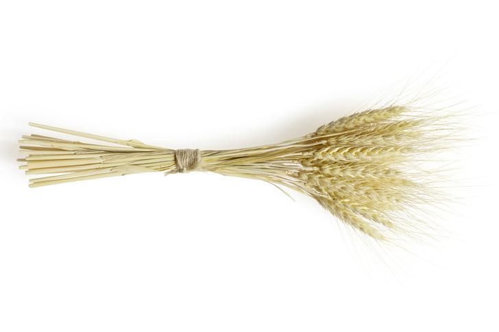 Фото №1 - Почему хлеб пекут только из злаков, а не из семян других растений?